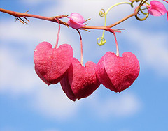 Frugal Valentine's Day Tips