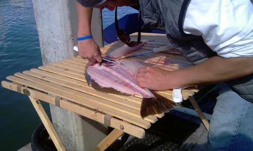 Gutting a Fish